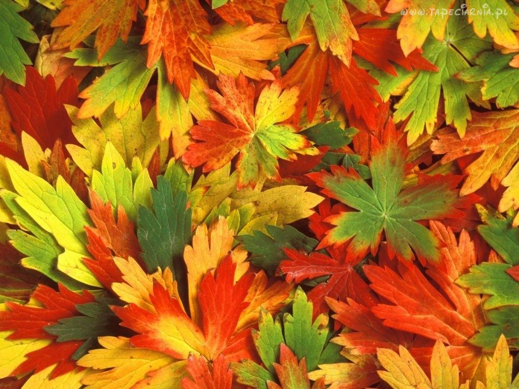 Witamina D a jesień