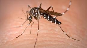 Sposoby na komary