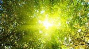 Wykorzystajmy słońce na D-ficyt.