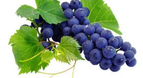 Winogrona najlepsze w kosmetyce
