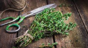 Jakie zioła na alergię?